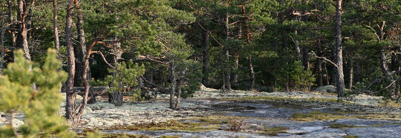 Kalevalainen Jäsenkorjaus Turku